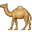dromedary_camel